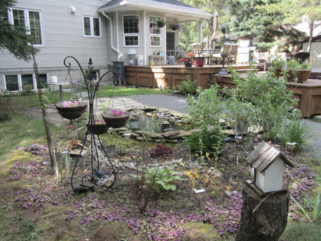 rain garden installed in a backyard